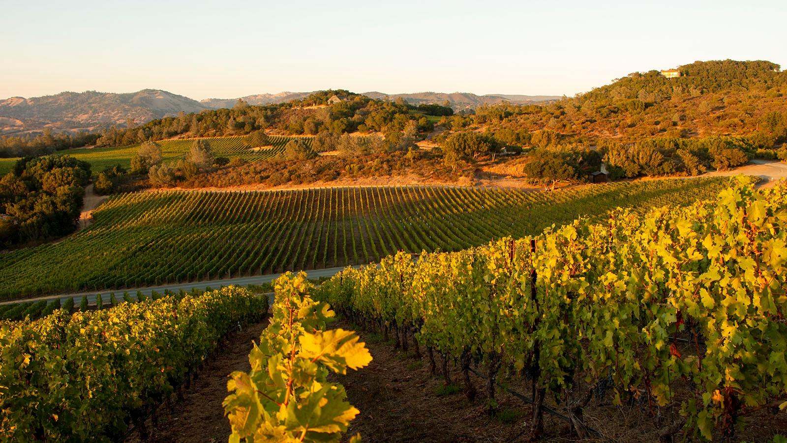 Hall Wines Home - Montagna Vineyard - Pritchard Hill