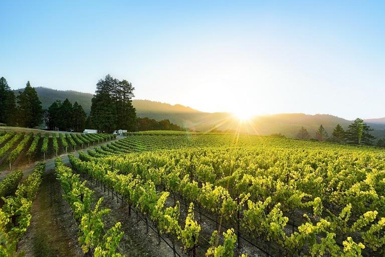 Beller Vineyard