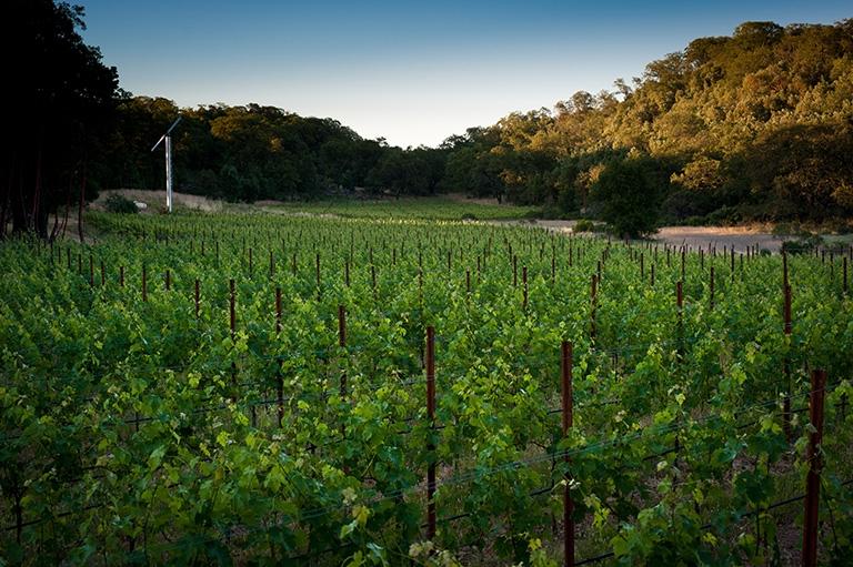 Walt Ranch Vineyard