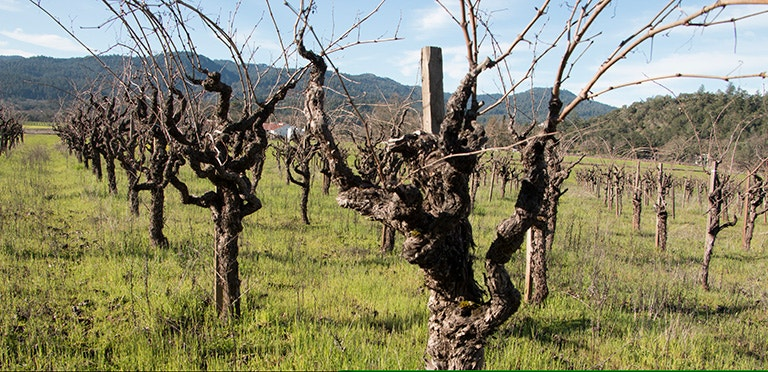 Cook Vineyard