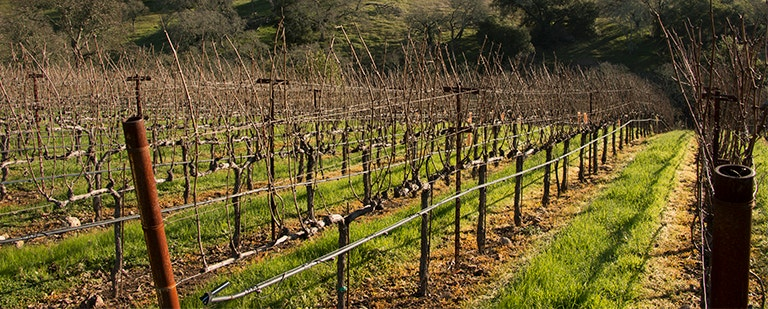 Dellar-Friedkin Vineyard