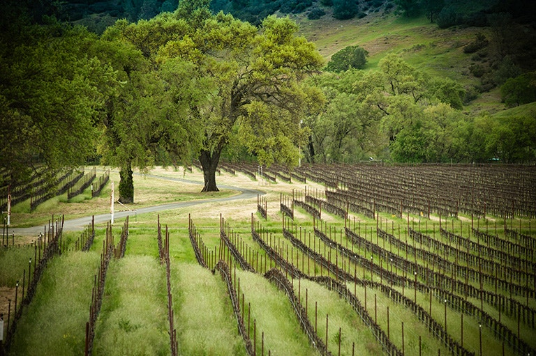 Hardester Ranch Vineyard