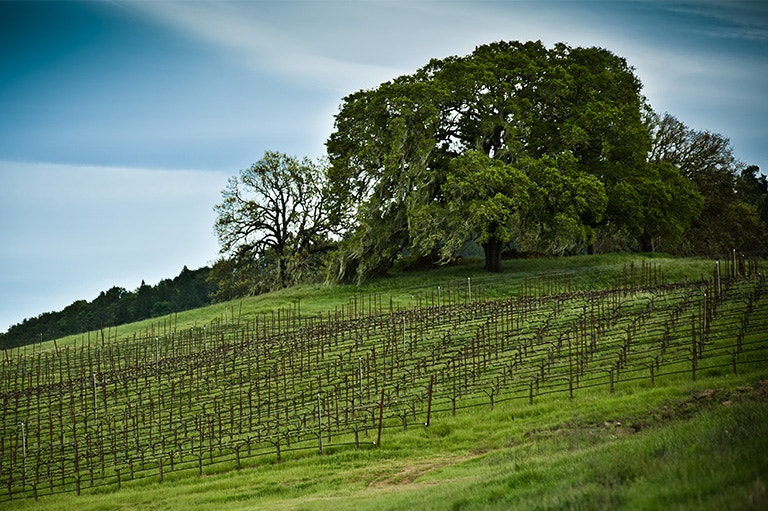 Hardester Ranch Vineyard