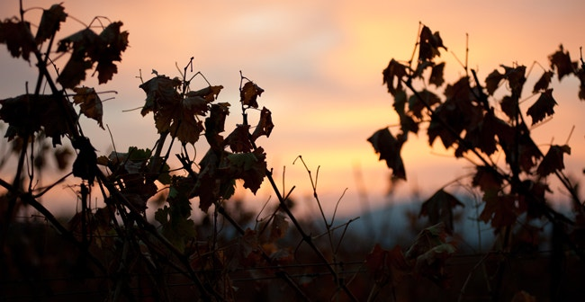 HALL Wines Fall Vineyard, Napa Valley